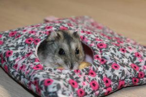 Hamster3