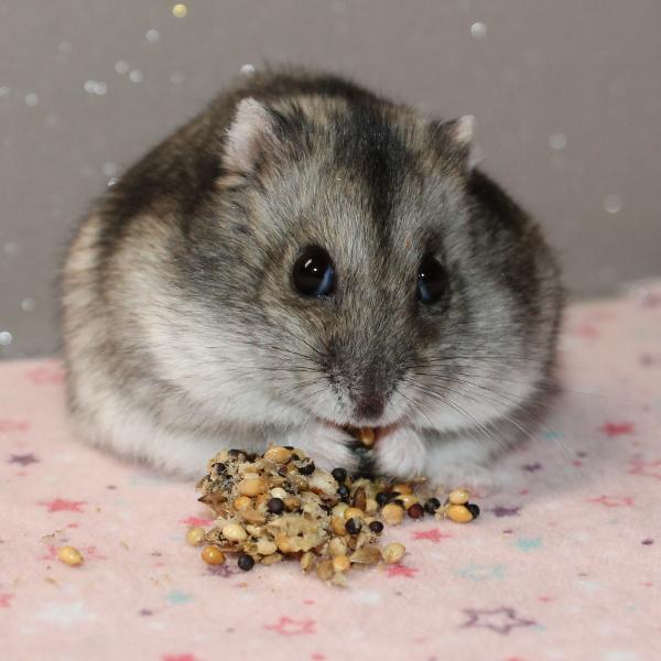 Cookies aux graines pour hamsters