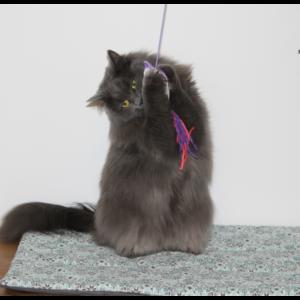 Loupiote, sa canne à pêche et son tapis