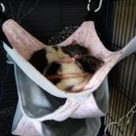 Nos rates : Croquette et Nevada