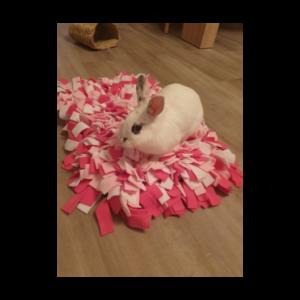 Lapinou avec son tapis de fouille