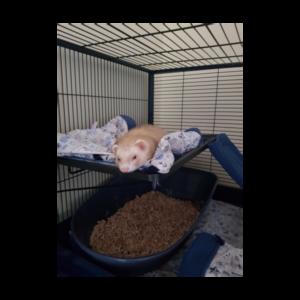 Une sieste bien méritée